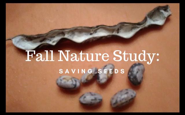 Fall Nature Study_ Saving Seeds