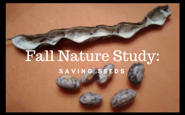 Fall Nature Study_ Saving Seeds
