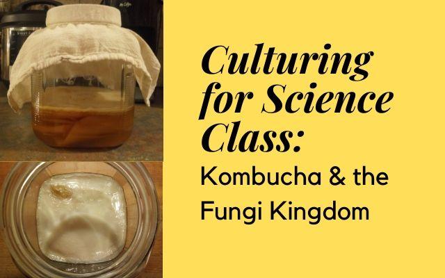 Kombucha, SCOBY, Culturing, Fungi Kingdom, Taxonomy